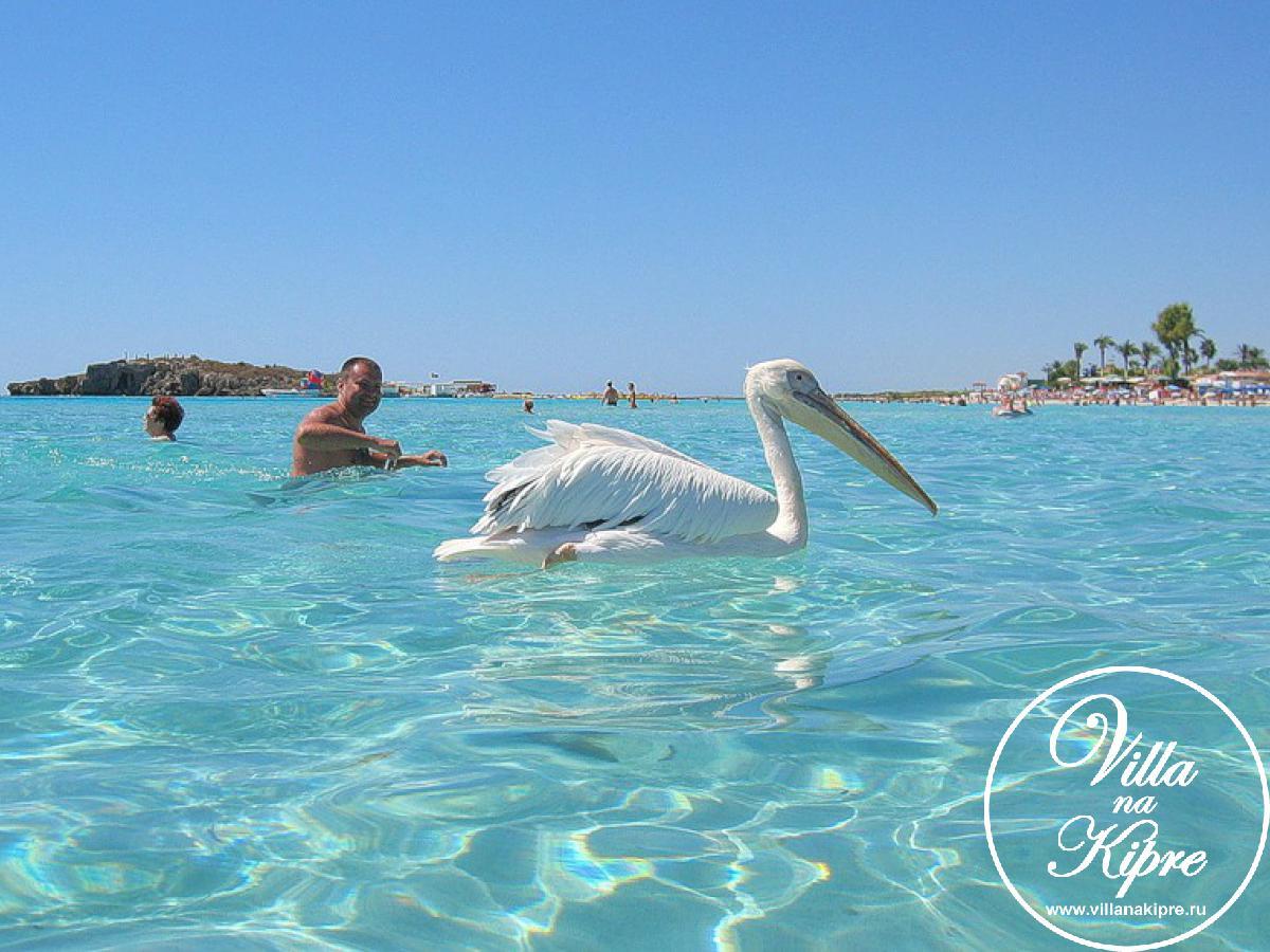 Айя Напа - один из популярнейших  молодежных  курортов Кипра